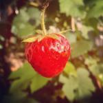 Căpșunelu